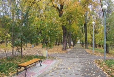 Что будет с деревьями в городском парке?